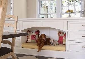 ข้อควรรู้ คิดจะเลี้ยงสุนัขในบ้าน ปัญหาที่ต้องเจอ และต้องเตรียมความพร้อมในเรื่องใดบ้าง