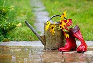 10 วิธีดูแลและรักษาต้นไม้ ให้สวนสวยตลอดหน้าฝนนี้