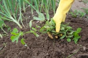 วิธีกำจัดวัชพืชแบบธรรมชาติ ไม่ใช้สารเคมีทำลายสวน ช่วยรักษาบรรยากาศในสวนให้สวยงาม