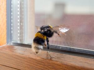 ดูแลบ้านยังไงให้หมดปัญหากวนใจเรื่องแมลง