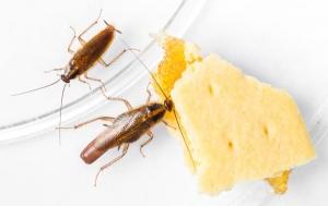 10 ทริคขจัดแมลงสาบตัววารร้าย ให้พ้นจากบ้านเรา