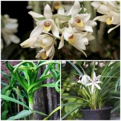 ทริคการเลี้ยงไม้ดอก ไม้ประดับว่านมงคล ตามหลักฮวงจุ้ยเสริมผู้ปลูก