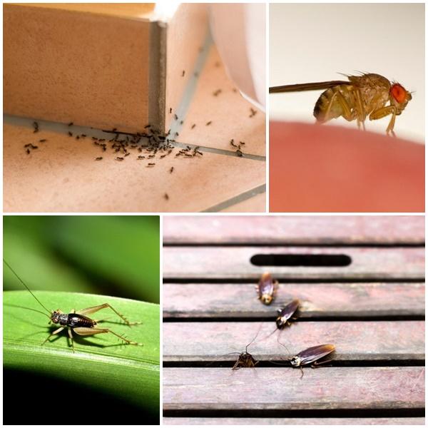 5 เทคนิกขจัดแมลงในบ้านแบบสุดประหยัด แถมปลอดภัยต่อบ้านคุณ