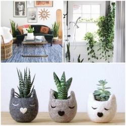 เพิ่มความสดชื่นให้บ้านคุณด้วยพันธุ์ไม้สีเขียว 5 ชนิด