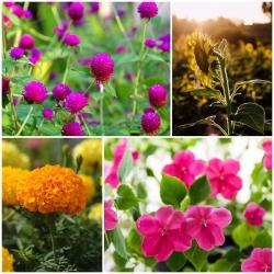 ดอกไม้ 7 ชนิดที่สามารถเติบโตเองได้โดยที่เราไม่ต้องดูแล