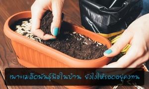 6 เทคนิคในการเพาะเมล็ดพันธุ์พีชในบ้าน ยังไงให้รอดอยู่คงทน