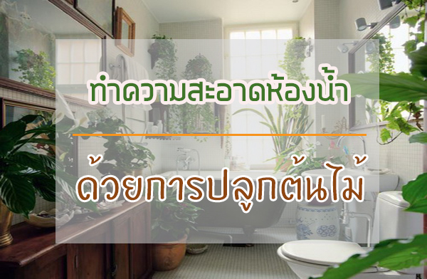 ทำความสะอาดห้องน้ำแสนง่าย จากการปลูกต้นไม้