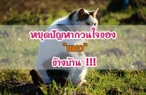 7 หลักการป้องกันแมวเข้าบ้านมาอึ-ฉี่บริเวณรอบบ้าน หยุดปัญหากวนใจเรื่องกลิ่น