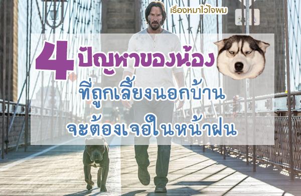 4 ปัญหาของน้องหมาที่ถูกเลี้ยงนอกบ้าน ที่จะต้องเจอในหน้าฝน