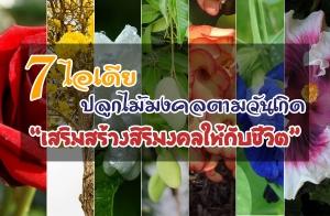 7 ไอเดียปลูกต้นไม้มงคลตามวันเกิด เสริมสร้างสิริมงคลให้กับชีวิต