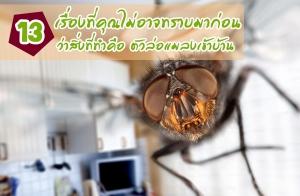 13 เรื่องที่คุณไม่อาจทราบมาก่อน ว่าสิ่งที่ทำคือ ตัวล่อแมลงเข้าบ้าน