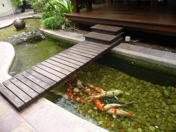 จำนวนปลาในบ่อกับหลักฮวงจุ้ย