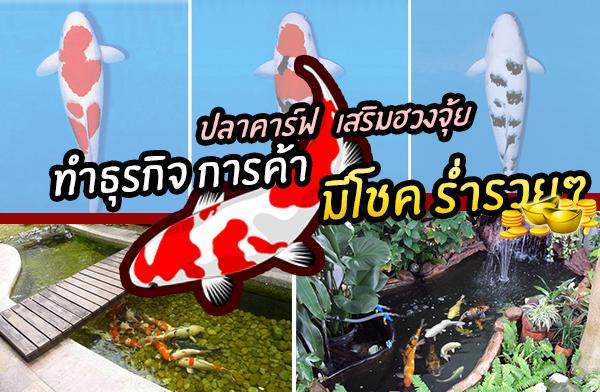 การเลี้ยงปลาคาร์ฟ เสริมฮวงจุ้ย