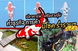 การเลี้ยงปลาคาร์ฟ ช่วยเสริมฮวงจุ้ยบ้าน ให้เจริญก้าวหน้าด้านธุรกิจ การค้าขายร่ำรวย