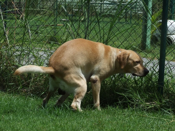 การป้องกันสุนัขอึหน้าบ้าน