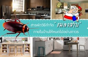 สารพัดวิธีกำจัดแมลงสาบภายในบ้านให้หมดไปอย่างถาวร