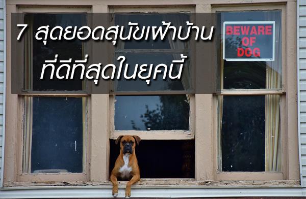 7 สุดยอดสุนัขเฝ้าบ้าน  ที่ดีที่สุดในยุคนี้