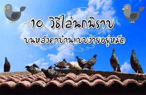 10 วิธีไล่นกพิราบบนหลังคาบ้าน แบบง่ายอยู่หมัด
