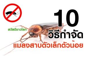 10 วิธีกำจัดแมลงสาบตัวเล็กตัวน้อย ให้หมดไปจากบ้านของเราแล้วไม่กลับมาอีก