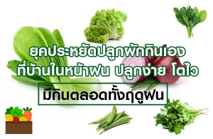 ยุคประหยัดปลูกผักกินเองที่บ้านในหน้าฝน ปลูกง่าย โตไว มีกินตลอดทั้งฤดูฝน