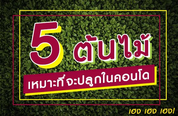 5 ต้นไม้เหมาะที่จะปลูกในคอนโด เฮง เฮง เฮง