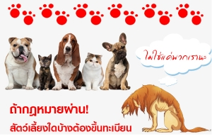 ถ้ากฎหมายผ่าน! สัตว์เลี้ยงใดบ้างต้องขึ้นทะเบียน ไม่ใช่แค่หมา-แมว