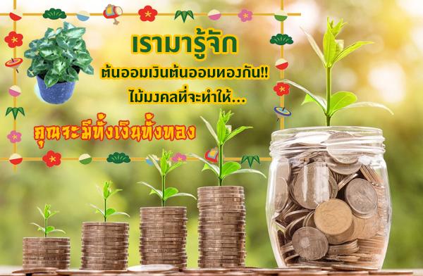 เรามารู้จักต้นออมเงินต้นออมทองกัน !! ไม้มงคลที่จะทำให้คุณมีเงินเก็บ