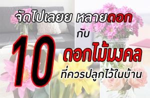 จัดไปเลยหลายดอก กับ 10 ดอกไม้มงคล ที่ควรปลูกไว้ในบ้าน