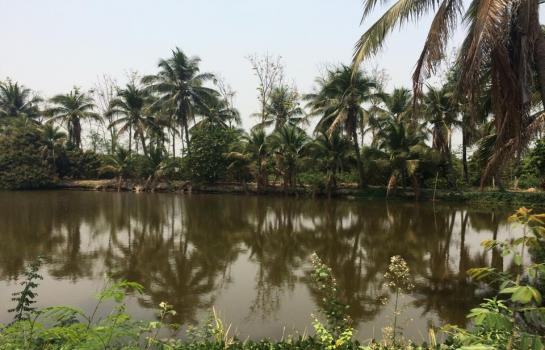 Land for sale with 2 fish ponds 5 rai 1 ngaan near mae jo for Fish suitable for ponds