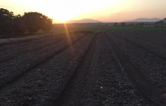 ขายที่ดิน 650000บาท ขายที่ดิน 3 งาน 50 ตารางวา ตำบล ดอนเปา อำเภอ แม่วาง จังหวัด เชียงใหม่