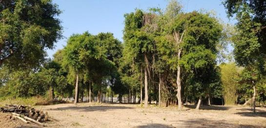 ขายสวนสวยสงบร่มรื่นติดแม่น้ำนครนายก ฮวงจุ้ยท้องมังกร 14ไร่1งาน 21ตรว. ต.สีนาวา อ.เมืองนครนายก