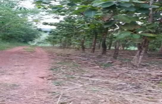 ขายถูก ที่ดินเปล่าปลูกสักอายุ10ปี อยู่ติดอ่างเก็บน้ำป่าซางเนื้อที่ 2ไร่ 65ตรว.ไร่ละ6.5แสนบาทอากาศดีวิวเขา ต.โป่งแพร่อ.แม่ลาว ห่างเชียงราย20กม.โทร0813573848