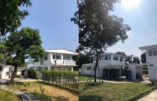 ให้เช่าบ้านเดี่ยว 2 หลัง ให้ทำธุรกิจได้ : ถนนจรัลสนิทวงศ์ 13 ซอยบางแวก 21 พื้นที่ 1 ไร่ครึ่ง บ้านสวยร่มรื่น เช่า 55,000 บาท